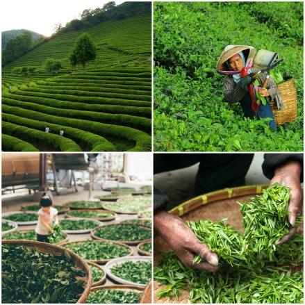 im Tee steckt jede Menge händischer Arbeit