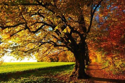 der Herbst ist eine wundervolle Jahreszeit
